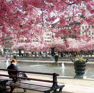 Stockholm Parks & Gardens
